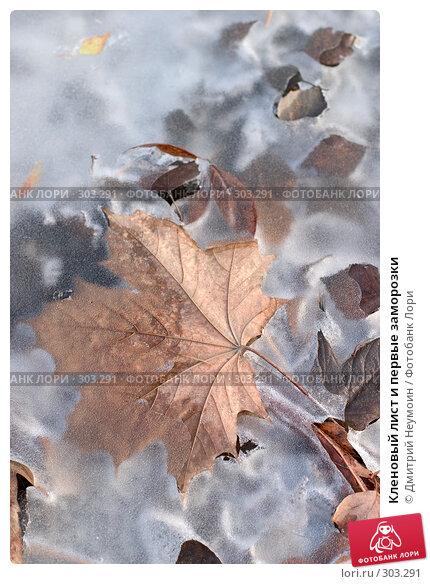 Кленовый лист и первые заморозки, эксклюзивное фото № 303291, снято 22 июня 2017 г. (c) Дмитрий Неумоин / Фотобанк Лори