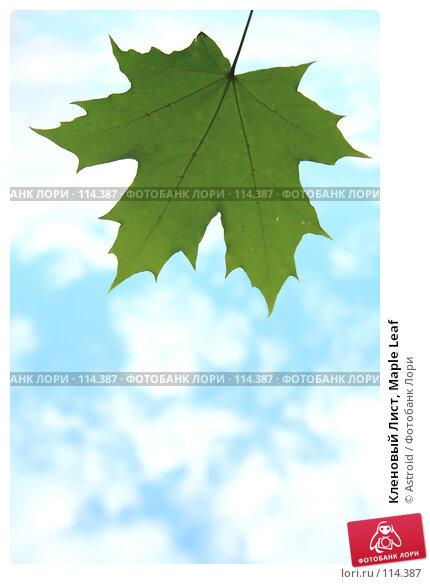Купить «Кленовый Лист, Maple Leaf», фото № 114387, снято 6 августа 2007 г. (c) Astroid / Фотобанк Лори