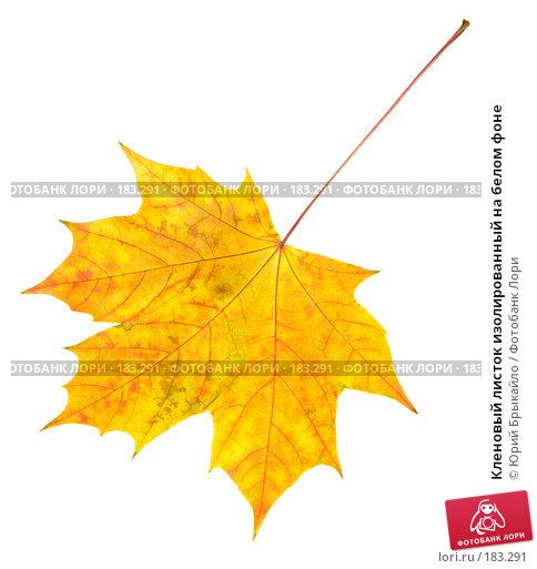 Кленовый листок изолированный на белом фоне, фото № 183291, снято 24 октября 2007 г. (c) Юрий Брыкайло / Фотобанк Лори