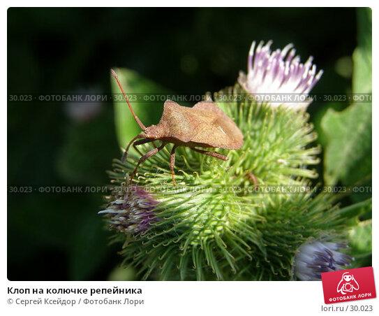 Клоп на колючке репейника, фото № 30023, снято 18 июля 2006 г. (c) Сергей Ксейдор / Фотобанк Лори