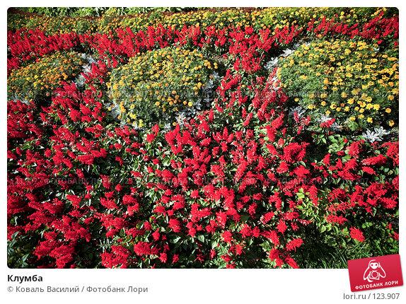 Клумба, фото № 123907, снято 23 августа 2007 г. (c) Коваль Василий / Фотобанк Лори