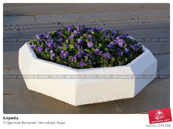 Клумба, фото № 275579, снято 4 мая 2008 г. (c) Цветков Виталий / Фотобанк Лори