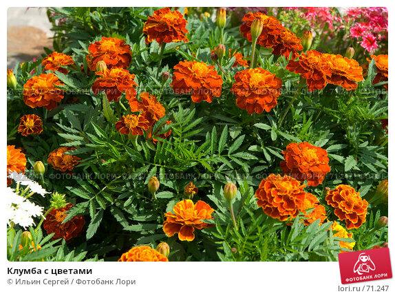 Купить «Клумба с цветами», фото № 71247, снято 10 августа 2007 г. (c) Ильин Сергей / Фотобанк Лори