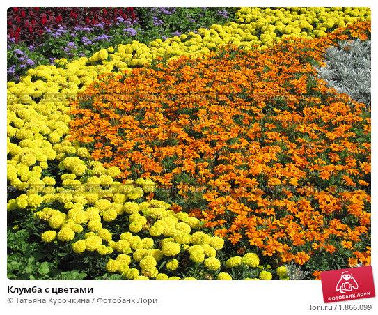 Клумба с цветами. Стоковое фото, фотограф Татьяна Курочкина / Фотобанк Лори