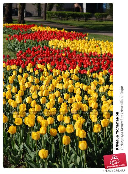Клумба тюльпанов, фото № 256483, снято 13 мая 2007 г. (c) Надежда Келембет / Фотобанк Лори