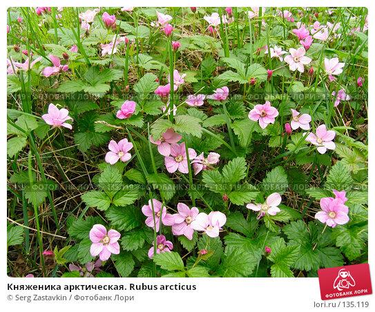 Княженика арктическая. Rubus arcticus, фото № 135119, снято 3 июля 2004 г. (c) Serg Zastavkin / Фотобанк Лори