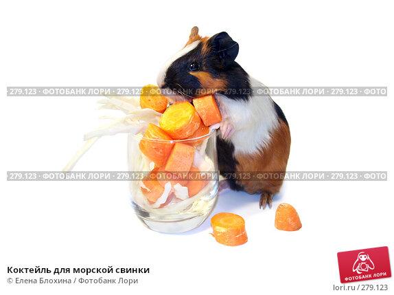 Коктейль для морской свинки, фото № 279123, снято 15 апреля 2008 г. (c) Елена Блохина / Фотобанк Лори