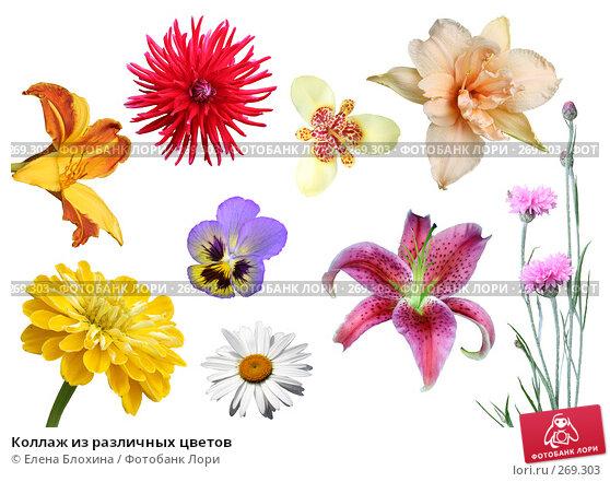 Купить «Коллаж из различных цветов», фото № 269303, снято 23 ноября 2017 г. (c) Елена Блохина / Фотобанк Лори