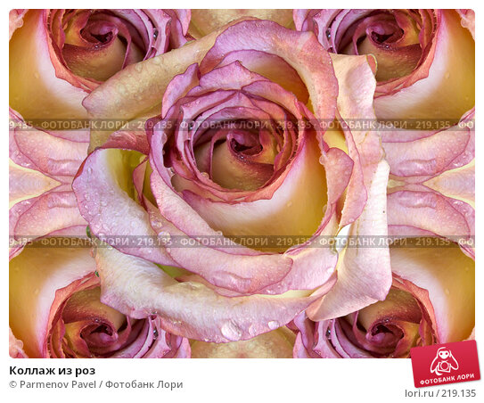 Купить «Коллаж из роз», фото № 219135, снято 6 марта 2008 г. (c) Parmenov Pavel / Фотобанк Лори