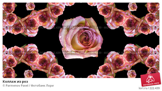Коллаж из роз, иллюстрация № 222439 (c) Parmenov Pavel / Фотобанк Лори