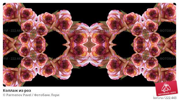 Купить «Коллаж из роз», иллюстрация № 222443 (c) Parmenov Pavel / Фотобанк Лори