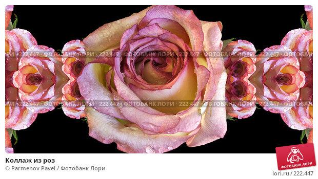 Коллаж из роз, иллюстрация № 222447 (c) Parmenov Pavel / Фотобанк Лори