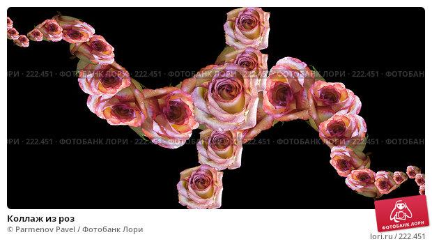 Коллаж из роз, иллюстрация № 222451 (c) Parmenov Pavel / Фотобанк Лори