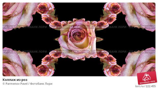 Коллаж из роз, иллюстрация № 222455 (c) Parmenov Pavel / Фотобанк Лори