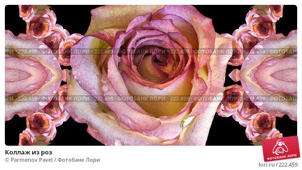 Коллаж из роз, иллюстрация № 222459 (c) Parmenov Pavel / Фотобанк Лори