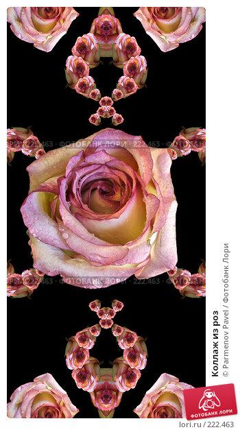 Купить «Коллаж из роз», иллюстрация № 222463 (c) Parmenov Pavel / Фотобанк Лори