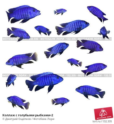 Коллаж с голубыми рыбками-2, фото № 132335, снято 28 октября 2016 г. (c) Дмитрий Ощепков / Фотобанк Лори