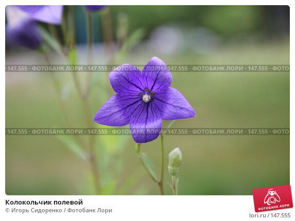 Купить «Колокольчик полевой», фото № 147555, снято 22 июля 2007 г. (c) Игорь Сидоренко / Фотобанк Лори