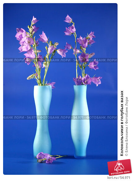 Колокольчики в голубых вазах, фото № 54971, снято 22 июня 2007 г. (c) Елена Блохина / Фотобанк Лори