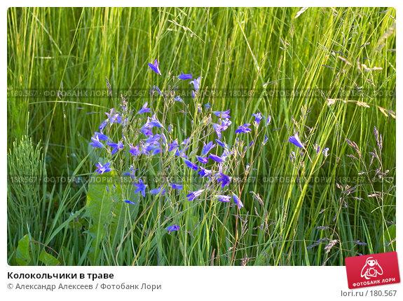 Купить «Колокольчики в траве», эксклюзивное фото № 180567, снято 16 июня 2007 г. (c) Александр Алексеев / Фотобанк Лори