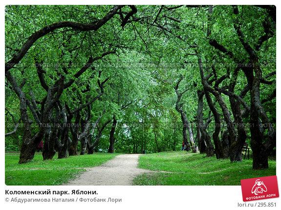 Купить «Коломенский парк. Яблони.», фото № 295851, снято 10 мая 2008 г. (c) Абдурагимова Наталия / Фотобанк Лори