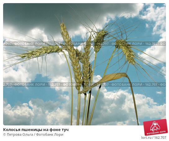 Колосья пшеницы на фоне туч, фото № 162707, снято 1 июля 2007 г. (c) Петрова Ольга / Фотобанк Лори