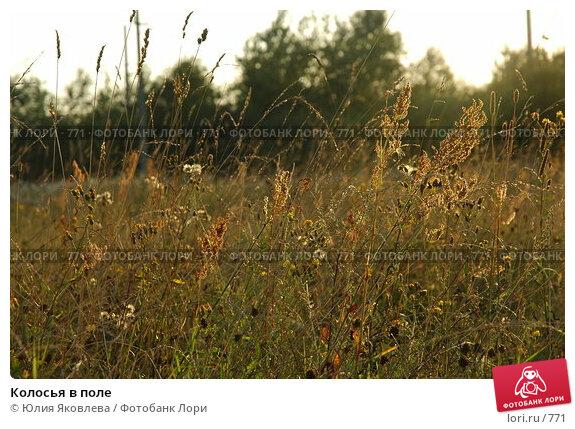 Колосья в поле, фото № 771, снято 5 августа 2005 г. (c) Юлия Яковлева / Фотобанк Лори