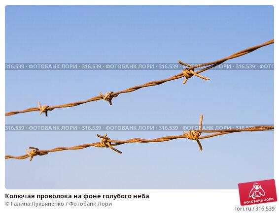 Колючая проволока на фоне голубого неба, фото № 316539, снято 11 мая 2008 г. (c) Галина Лукьяненко / Фотобанк Лори