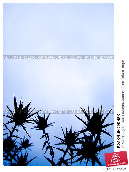 Купить «Колючий сорняк», фото № 235503, снято 27 октября 2007 г. (c) Виноградов Илья Владимирович / Фотобанк Лори