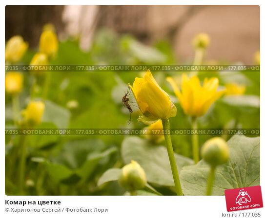 Купить «Комар на цветке», фото № 177035, снято 13 апреля 2006 г. (c) Харитонов Сергей / Фотобанк Лори