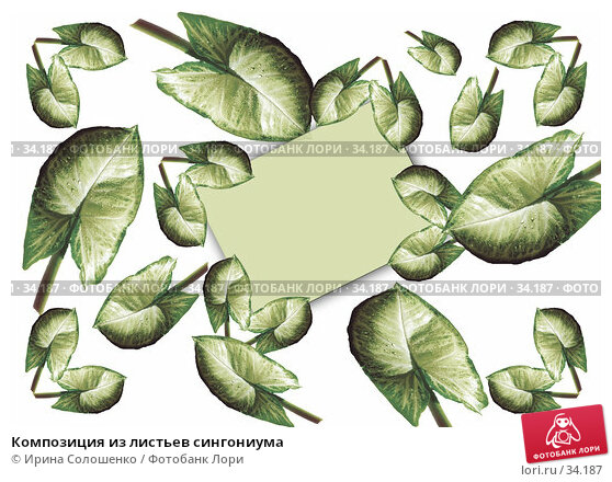Композиция из листьев сингониума, фото № 34187, снято 27 марта 2017 г. (c) Ирина Солошенко / Фотобанк Лори