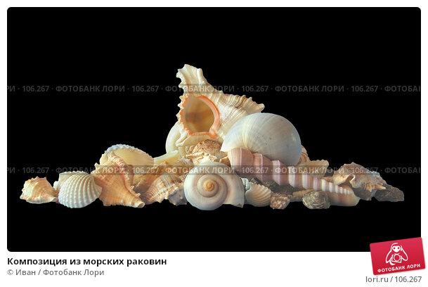 Композиция из морских раковин, фото № 106267, снято 30 марта 2007 г. (c) Иван / Фотобанк Лори