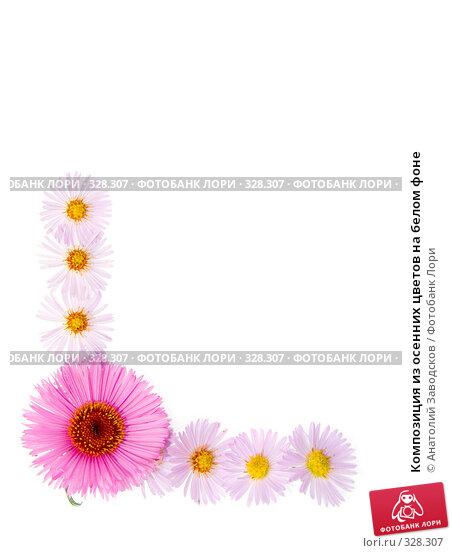 Купить «Композиция из осенних цветов на белом фоне», фото № 328307, снято 1 октября 2006 г. (c) Анатолий Заводсков / Фотобанк Лори