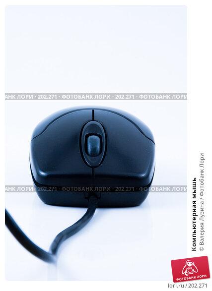 Компьютерная мышь, фото № 202271, снято 19 декабря 2007 г. (c) Валерия Потапова / Фотобанк Лори