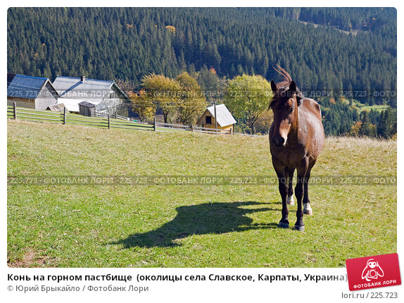 Конь на горном пастбище  (околицы села Славское, Карпаты, Украина), фото № 225723, снято 29 сентября 2007 г. (c) Юрий Брыкайло / Фотобанк Лори