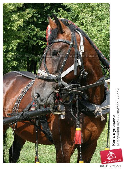 Конь в упряжке, фото № 94271, снято 1 июля 2007 г. (c) Марюнин Юрий / Фотобанк Лори