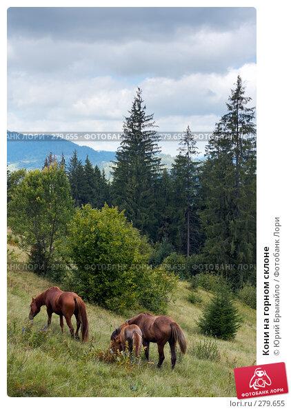 Кони на горном склоне, фото № 279655, снято 2 сентября 2007 г. (c) Юрий Брыкайло / Фотобанк Лори