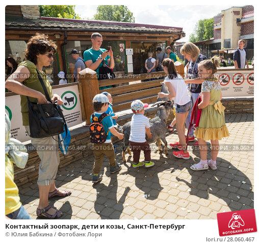 Купить «Контактный зоопарк, дети и козы, Санкт-Петербург», фото № 28060467, снято 26 июля 2017 г. (c) Юлия Бабкина / Фотобанк Лори