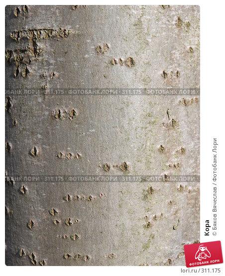 Купить «Кора», фото № 311175, снято 27 апреля 2008 г. (c) Бяков Вячеслав / Фотобанк Лори