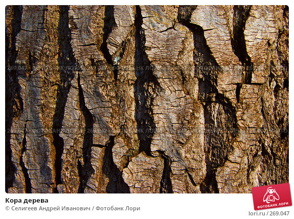 Кора дерева, фото № 269047, снято 11 апреля 2008 г. (c) Селигеев Андрей Иванович / Фотобанк Лори