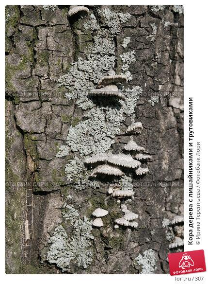 Кора дерева с лишайниками и трутовиками, эксклюзивное фото № 307, снято 15 мая 2005 г. (c) Ирина Терентьева / Фотобанк Лори