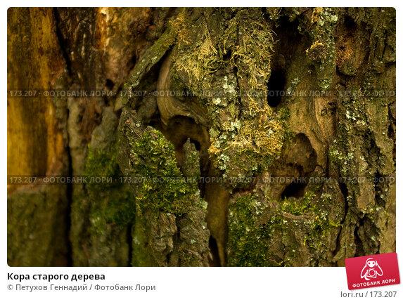 Кора старого дерева, фото № 173207, снято 8 июля 2007 г. (c) Петухов Геннадий / Фотобанк Лори