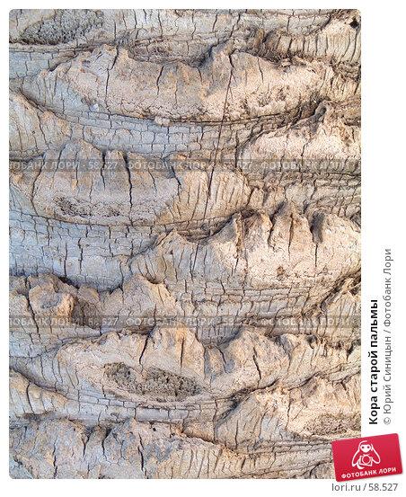 Купить «Кора старой пальмы», фото № 58527, снято 3 октября 2004 г. (c) Юрий Синицын / Фотобанк Лори