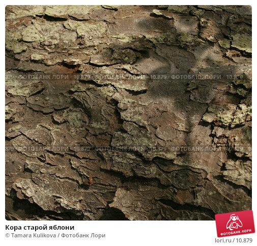 Купить «Кора старой яблони», фото № 10879, снято 8 октября 2006 г. (c) Tamara Kulikova / Фотобанк Лори