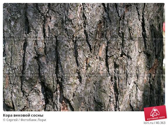 Кора вековой сосны, фото № 40363, снято 6 мая 2007 г. (c) Сергей / Фотобанк Лори