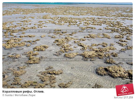 Коралловые рифы. Отлив., фото № 217259, снято 12 сентября 2007 г. (c) hunta / Фотобанк Лори