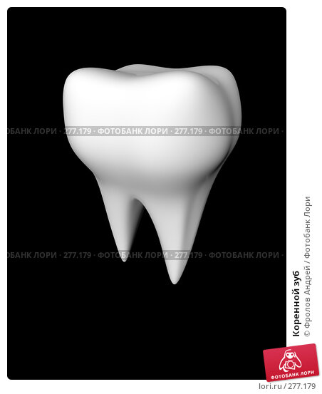 Купить «Коренной зуб», фото № 277179, снято 18 марта 2018 г. (c) Фролов Андрей / Фотобанк Лори
