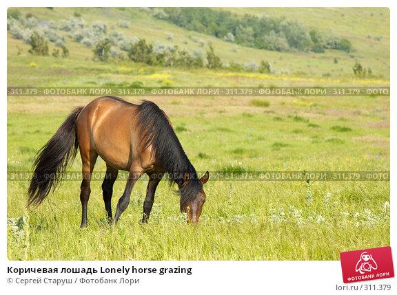 Коричевая лошадь Lonely horse grazing, фото № 311379, снято 4 июня 2008 г. (c) Сергей Старуш / Фотобанк Лори
