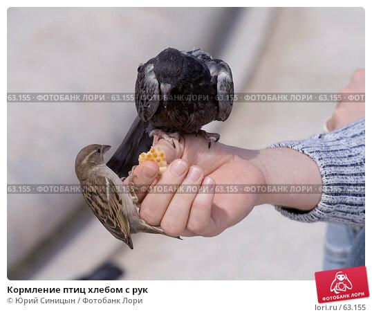 Кормление птиц хлебом с рук, фото № 63155, снято 23 июня 2007 г. (c) Юрий Синицын / Фотобанк Лори