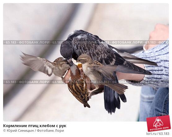 Кормление птиц хлебом с рук, фото № 63183, снято 23 июня 2007 г. (c) Юрий Синицын / Фотобанк Лори